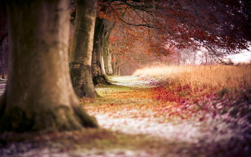 Autumn Trees Wallpaper - Autumn Trees Wallpaper