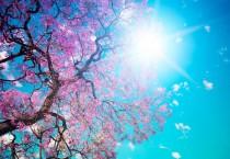 Blooming Blossoms Spring - Blooming Blossoms Spring