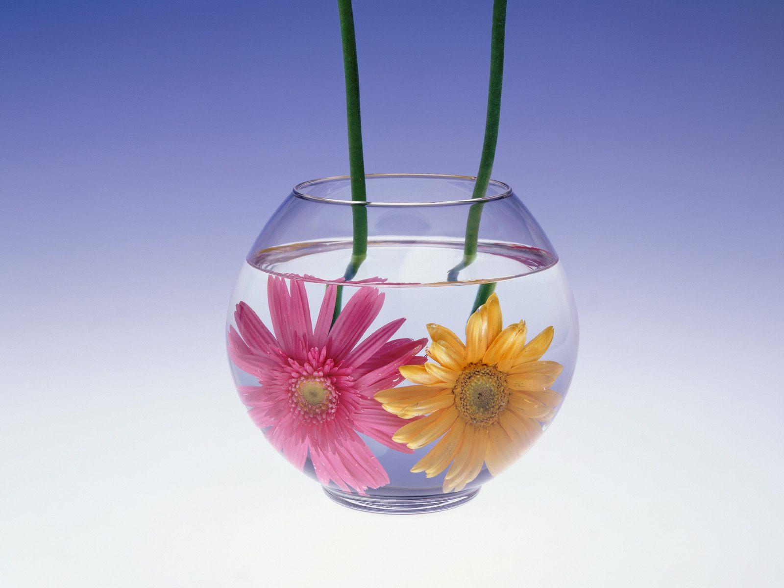 Flowers In Glass - Flowers In Glass