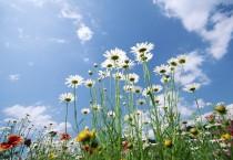 Flowers Glade - Flowers Sky Glade
