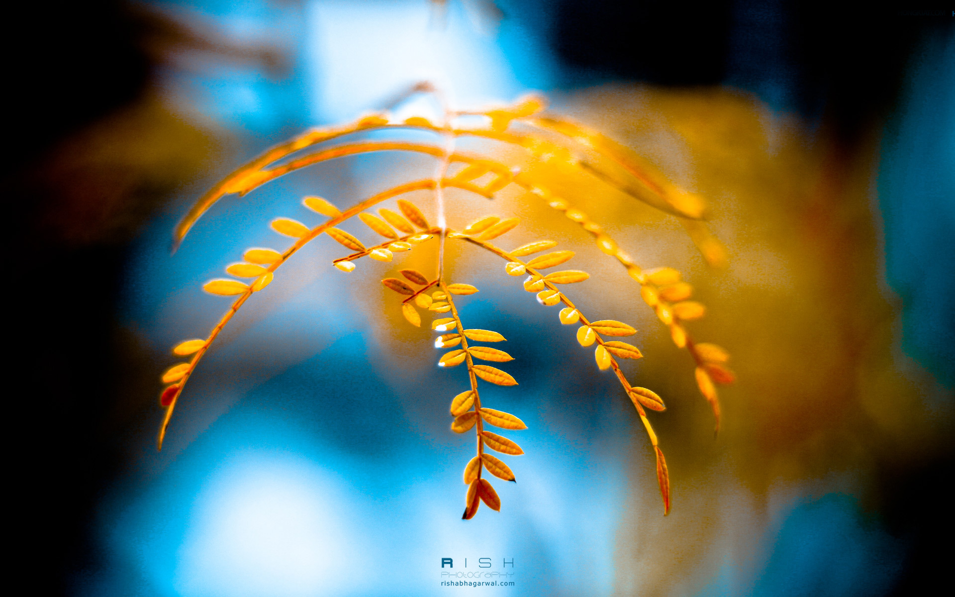 Golden Foliage Wallpaper - Golden Foliage Wallpaper