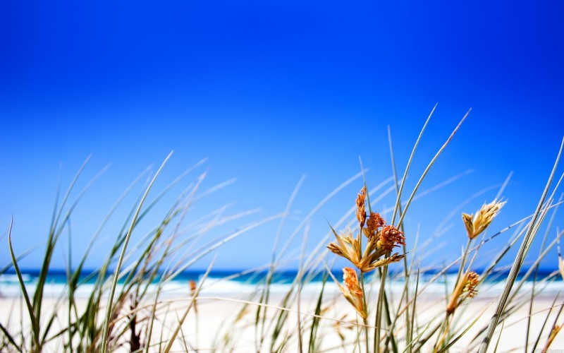 Grass Beach Wallpaper - Grass Beach Wallpaper