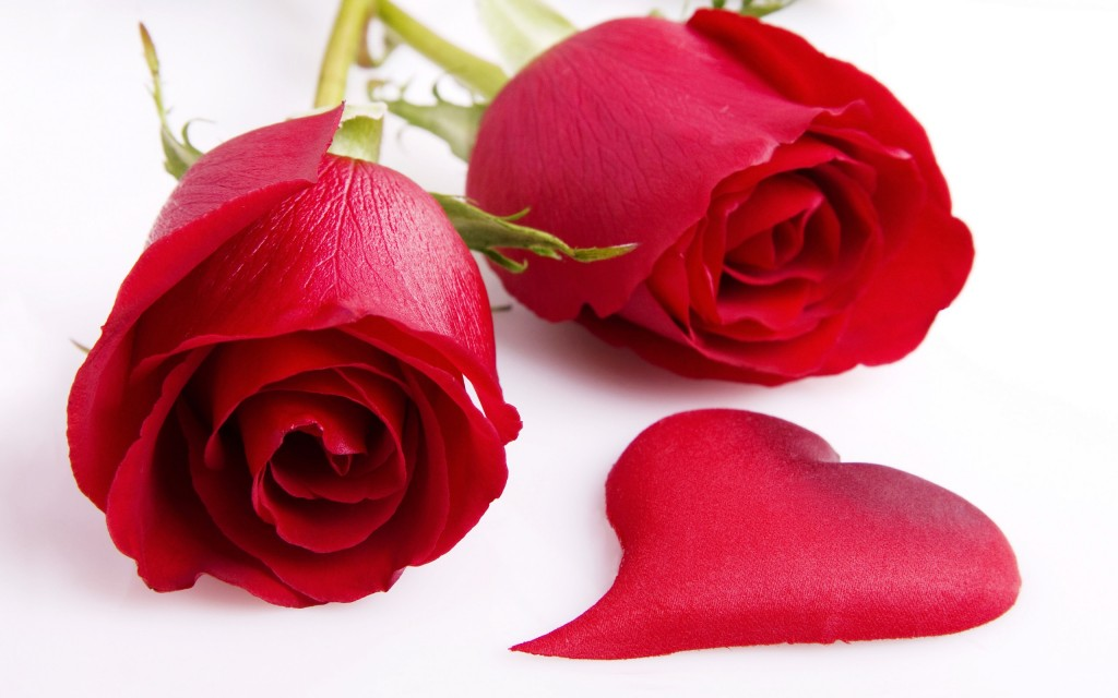 Love in Red Roses - Love in Red Roses