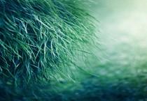 Pure Green Grass - Pure Green Grass