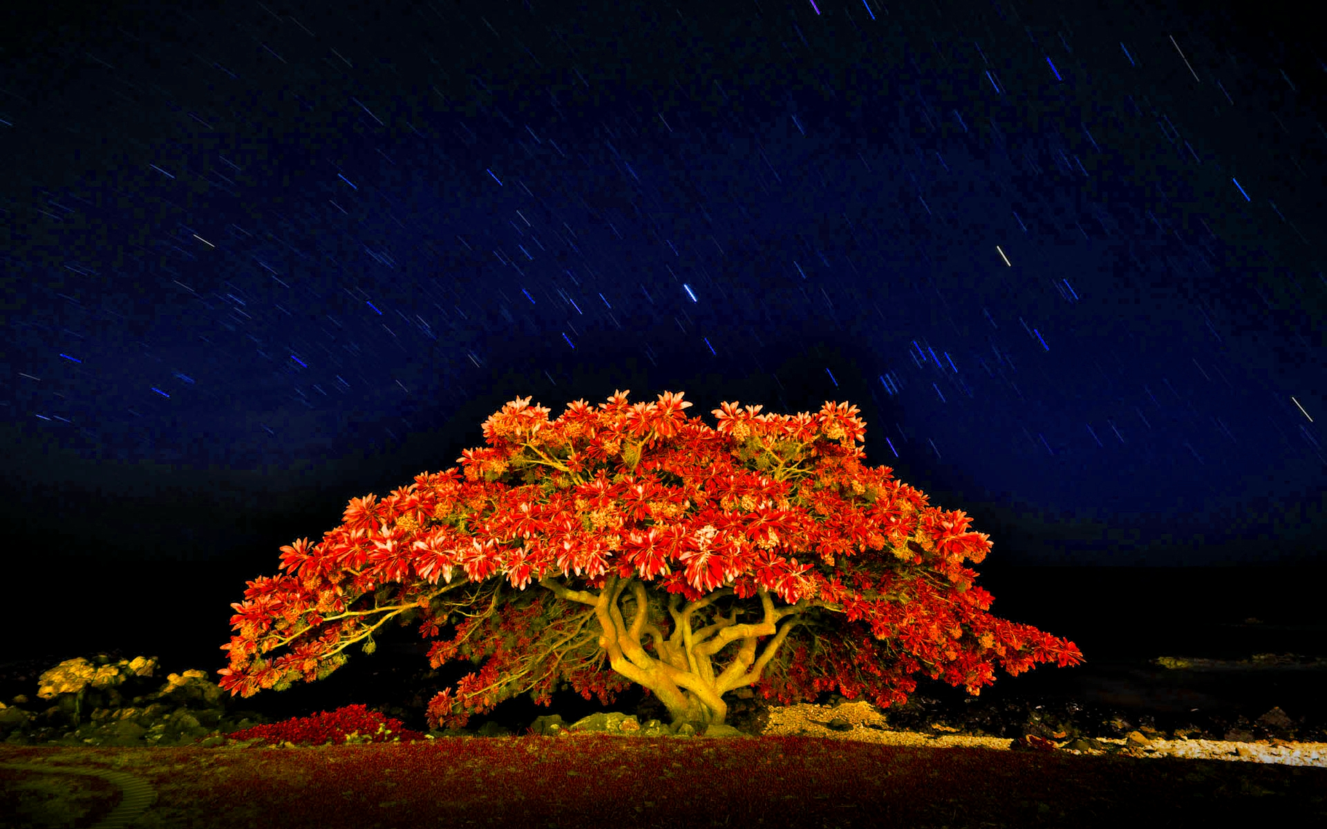 Autumn Meteor Rainfall - Autumn Meteor Rainfall