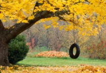 Autumn Rope Swing - Autumn Rope Swing