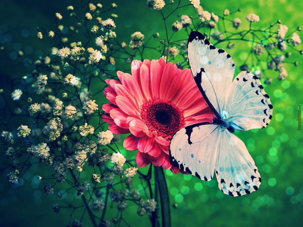 Blue Butterfly With Flower - Blue Butterfly With Flower