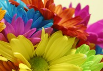 Bright Color Blooms - Bright Color Blooms
