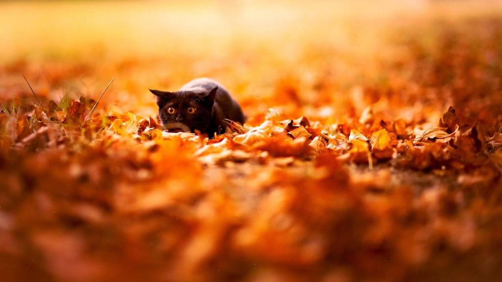 Cat in Autumn - Cat in Autumn