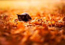 Cat in Autumn - Cat in Autumn