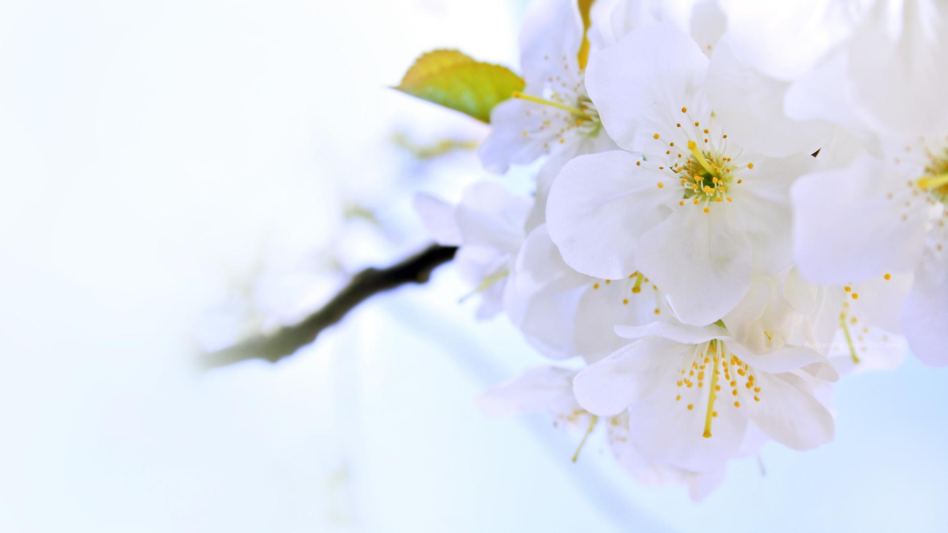 Flower Summer Bright - Flower Summer Bright