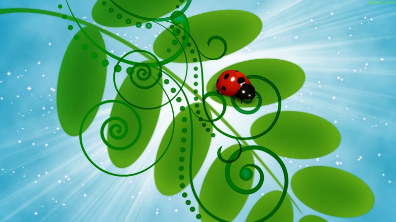 Insect Vector Design - Insect Vector Design