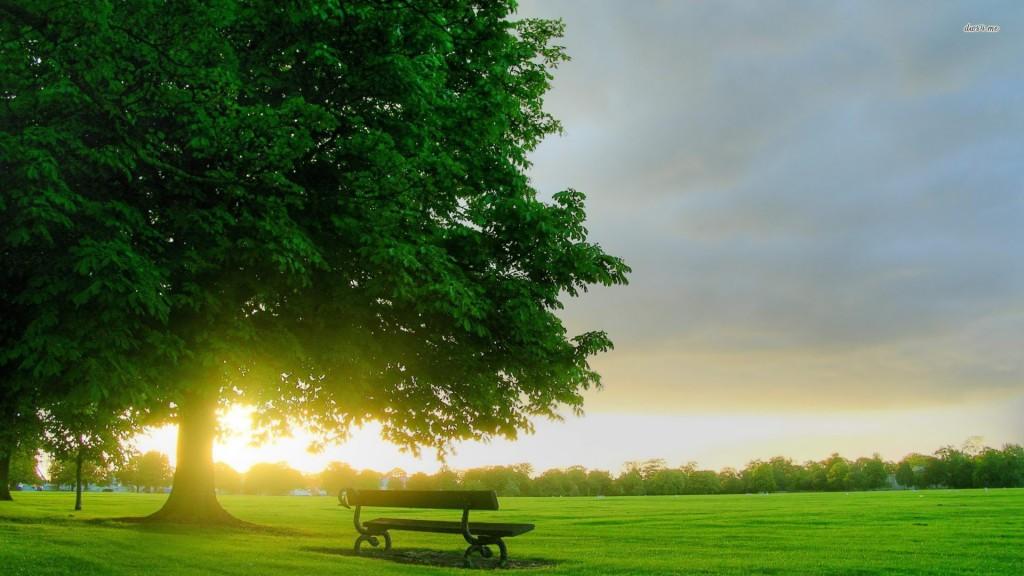 Sunrise In The Park - Sunrise In The Park