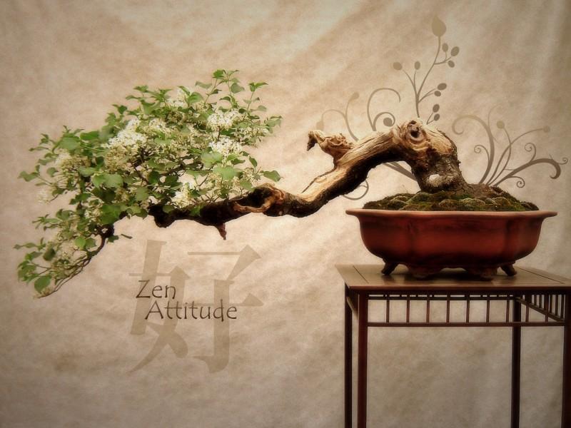 Zen Attitude Natural - Zen Attitude Natural
