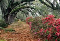 Beautiful Nature Forest - Beautiful Nature Forest