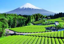 Fuji Mountains Background - Fuji Mountains Background