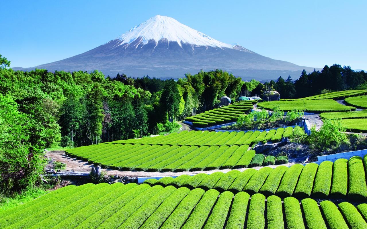 Fuji Mountains Background - Fuji Mountains Background