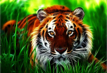 Incisive Tiger - Incisive Tiger