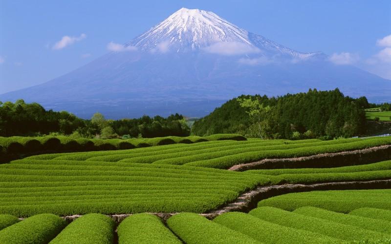 Snow Fuji Mountain - Snow Fuji Mountain