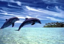 Beautiful Bottlenose Dolphin Wide - Beautiful Bottlenose Dolphin Wide