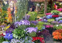 Beautiful Flower Garden - Beautiful Flower Garden
