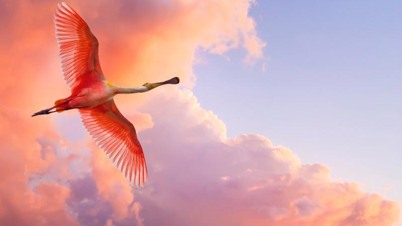 Beautiful Flying Flamingo - Beautiful Flying Flamingo