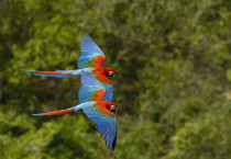 Beautiful Parrot Birds - Beautiful Parrot Birds