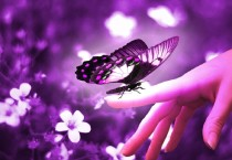Beautiful Purple Butterfly - Beautiful Purple Butterfly