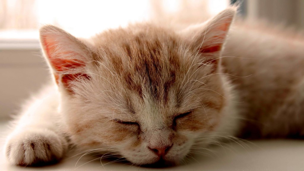 Kitten Sleeping Images - Kitten Sleeping Images