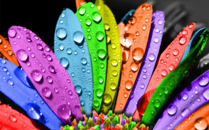 Rainbow Flower Wet - Rainbow Flower Wet