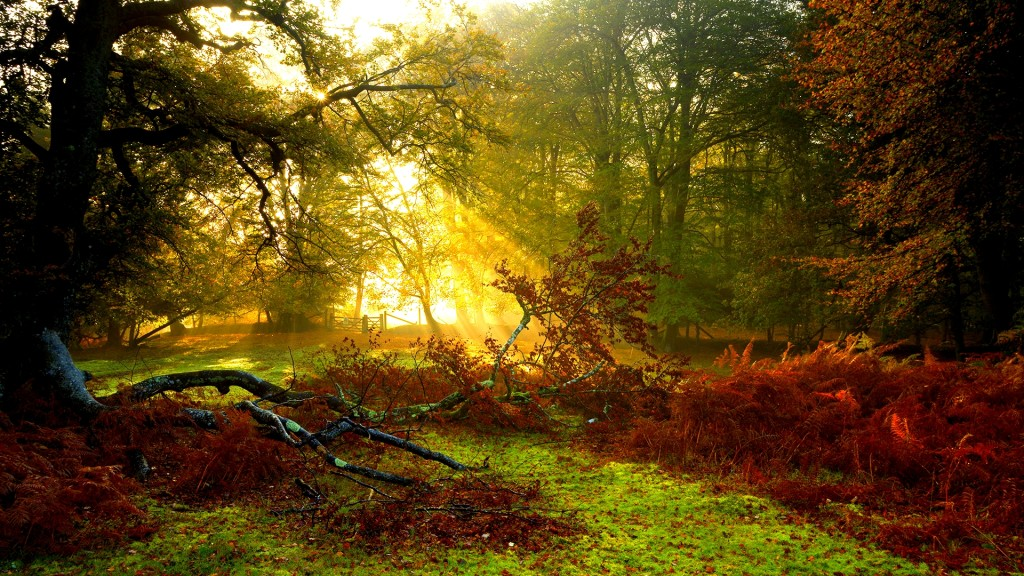 Rays Of The Sunlight Wallpaper - Rays Of The Sunlight Wallpaper