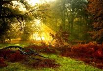 Rays Of The Sunlight Wallpaper - Rays Of The Sunlight Wallpaper