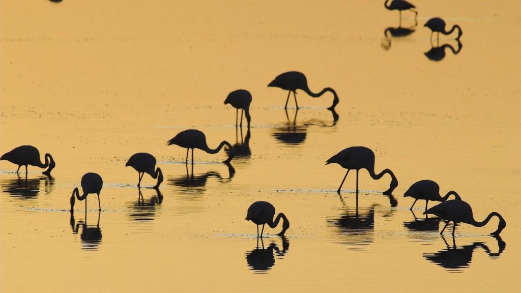 Silhouette Flamingo - Silhouette Flamingo