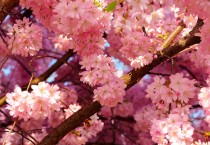 Smooth Pink Flowers - Smooth Pink Flowers