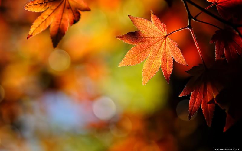Autumn Leaves Wallpaper - Autumn Leaves Wallpaper