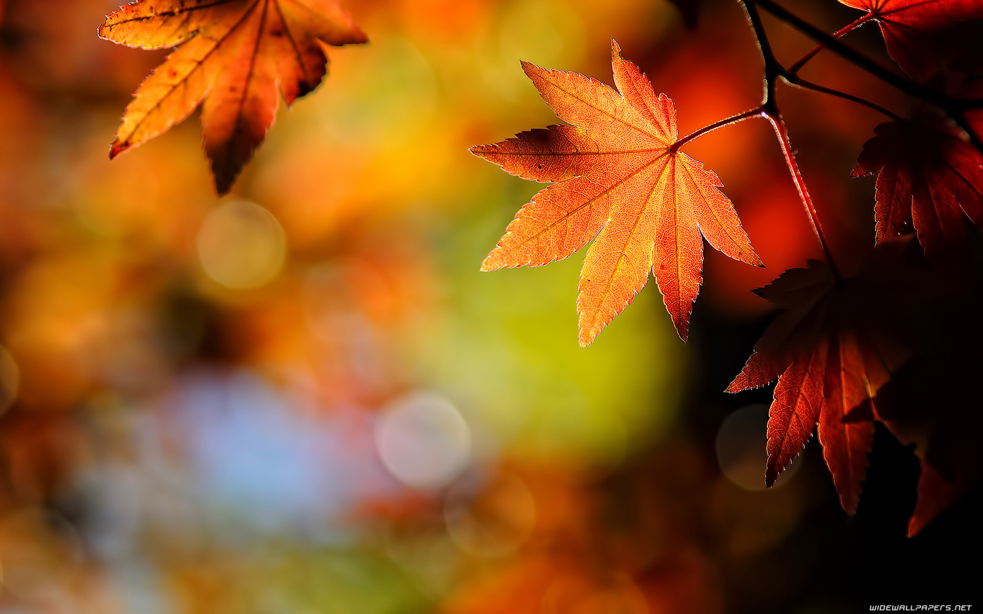 Autumn Leaves Wallpaper - Autumn Leaves Wallpaper