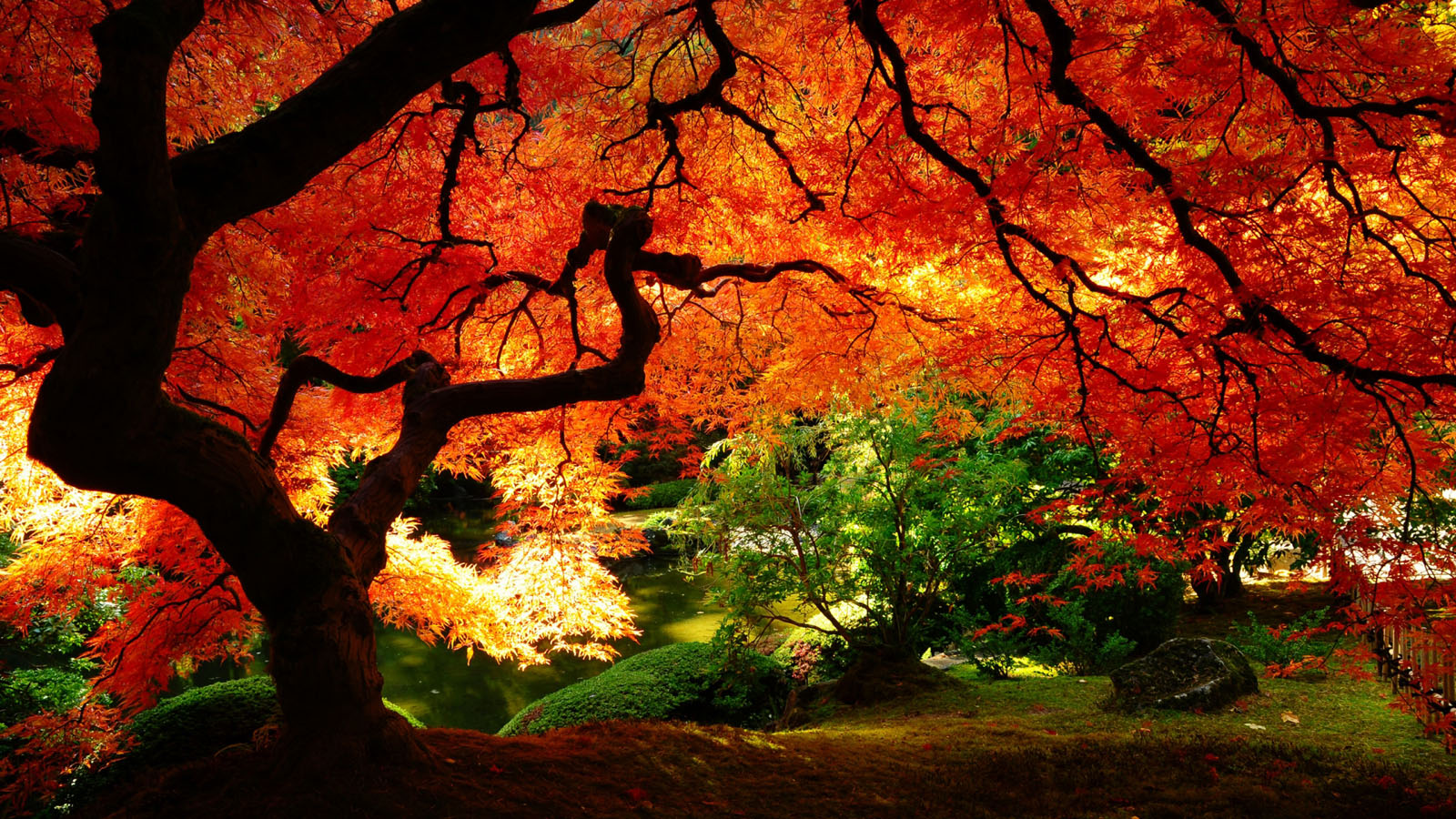 Autumn Nature Desktop - Autumn Nature Desktop