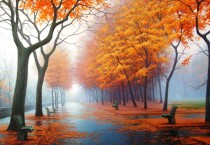 Autumn Trees Art - Autumn Trees Art