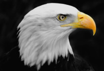 Beautiful Eagle Photos - Beautiful Eagle Photos