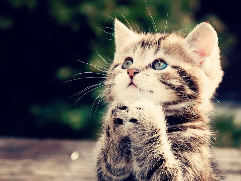Beautiful Kitten Pictures - Beautiful Kitten Pictures