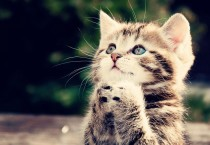 Beautiful Kitten Pictures - Beautiful Kitten Pictures
