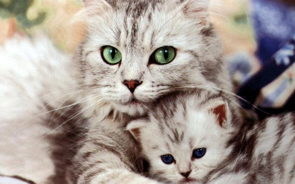 Beautiful Kitten Wallpaper - Beautiful Kitten Wallpaper