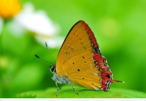 Chic Butterfly On The Nature - Chic Butterfly On The Nature