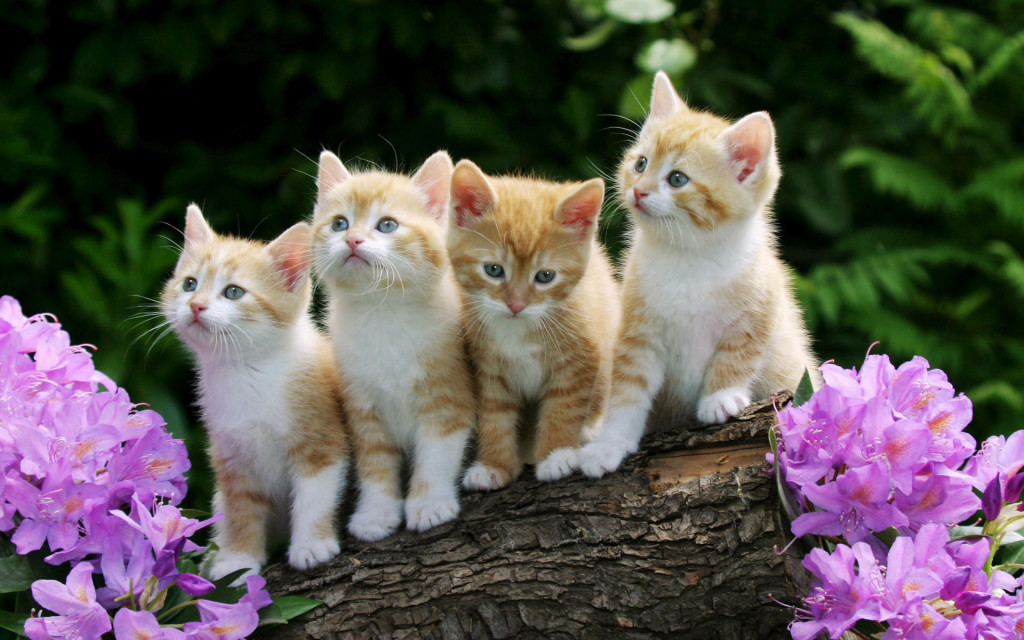 Cute Kittens Pictures - Cute Kittens Pictures