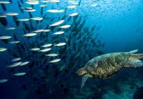Deep Sea Fish Cluster - Deep Sea Fish Cluster