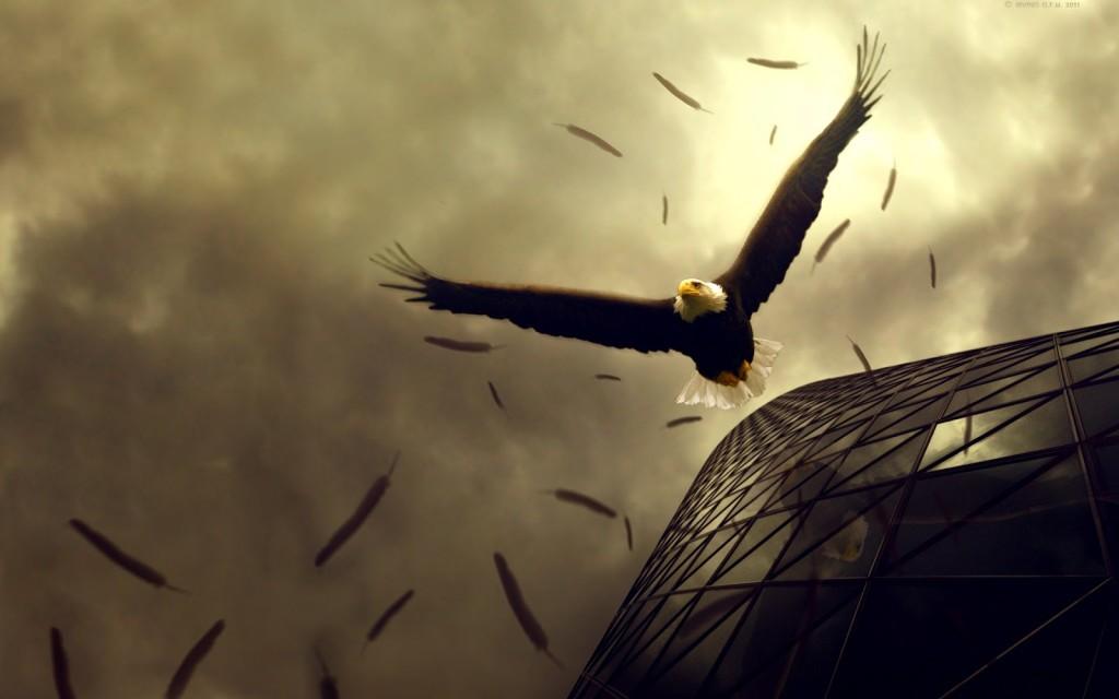 Eagle Flying Widescreen - Eagle Flying Widescreen