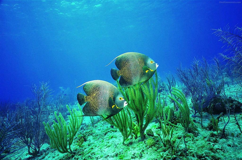 Fish Underwater Desktop - Fish Underwater Desktop