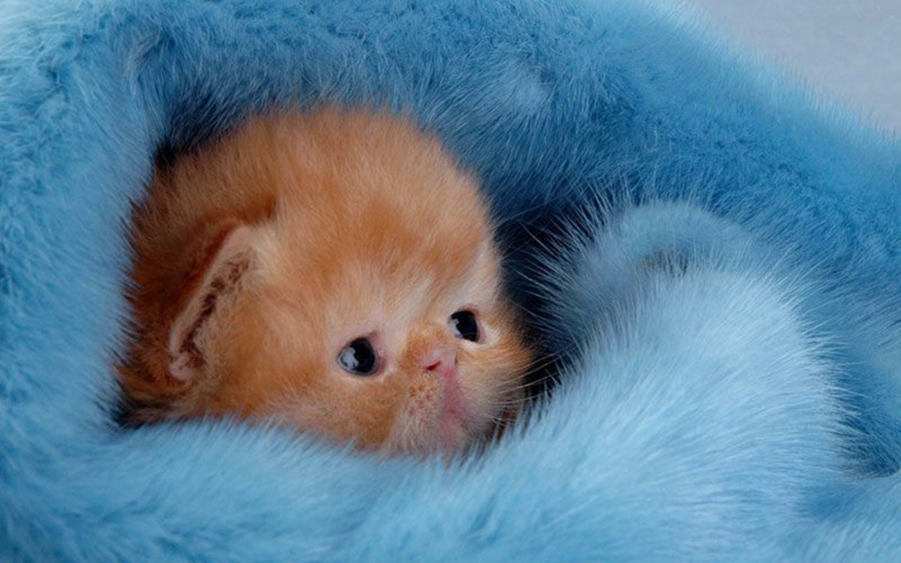 Funny Mini Kitten - Funny Mini Kitten