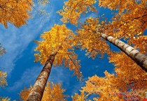 Golden Leaves Trees - Golden Leaves Trees