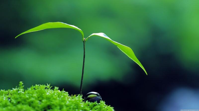 Green Plants Galaxy S4 - Green Plants Galaxy S4